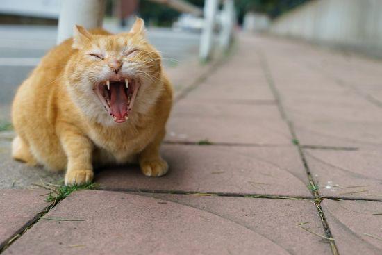 怒りの感情は自己防衛反応